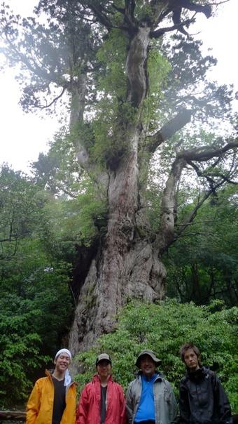ゴールの縄文杉で記念撮影。
